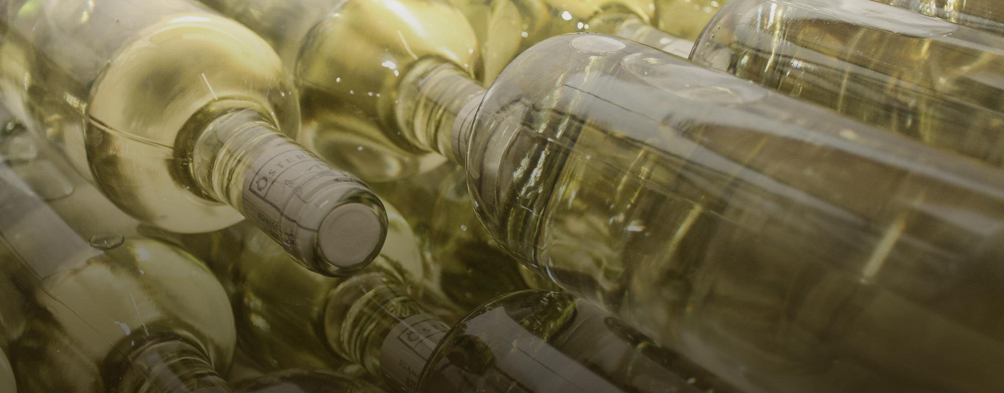 Bio-Weinbau